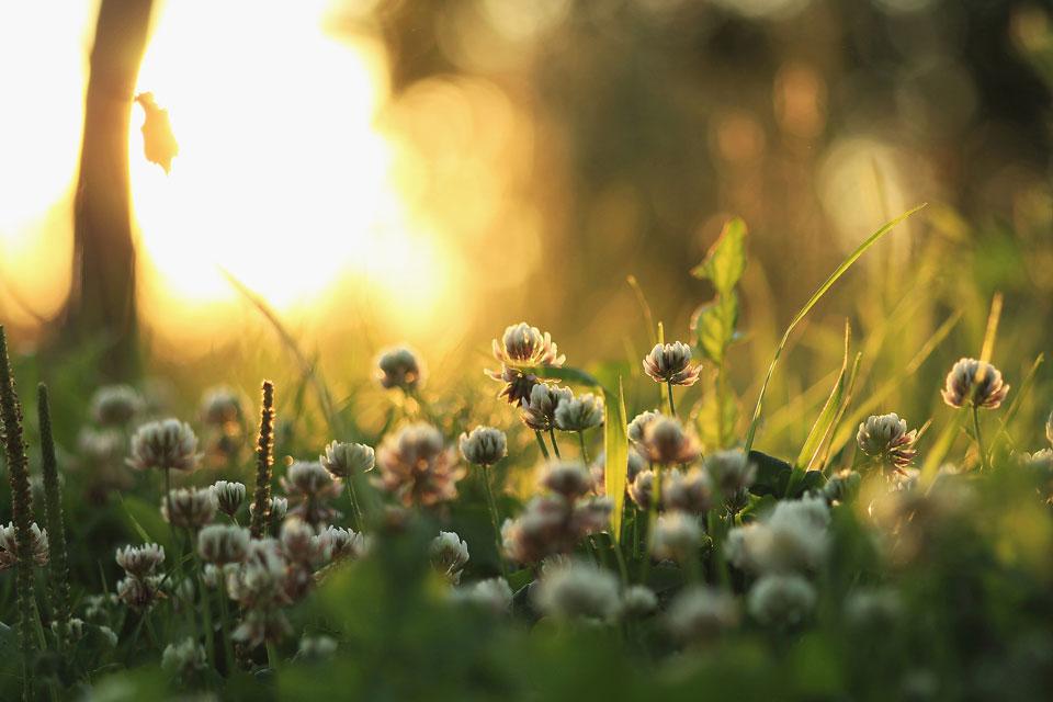 Интересные-картинки-лета,-вся-красота-природы---завораживающие-картинки-16