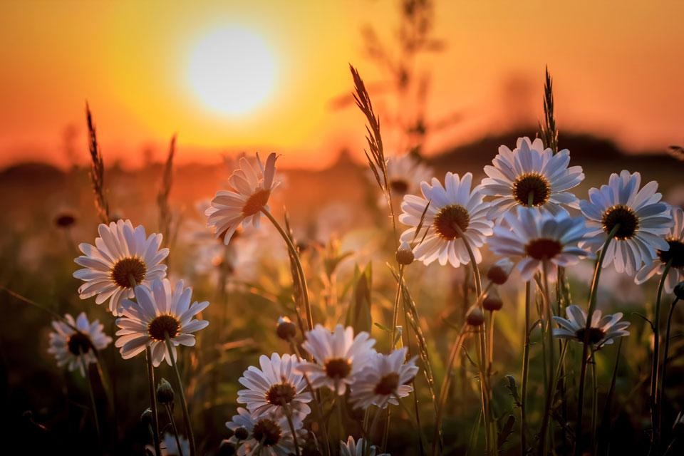 Интересные-картинки-лета,-вся-красота-природы-1