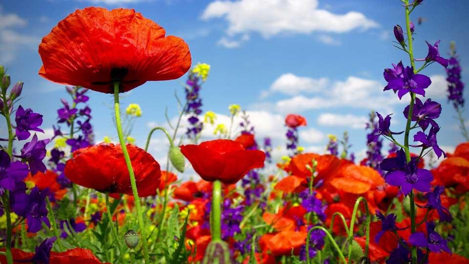 Интересные-картинки-лета,-вся-красота-природы-11