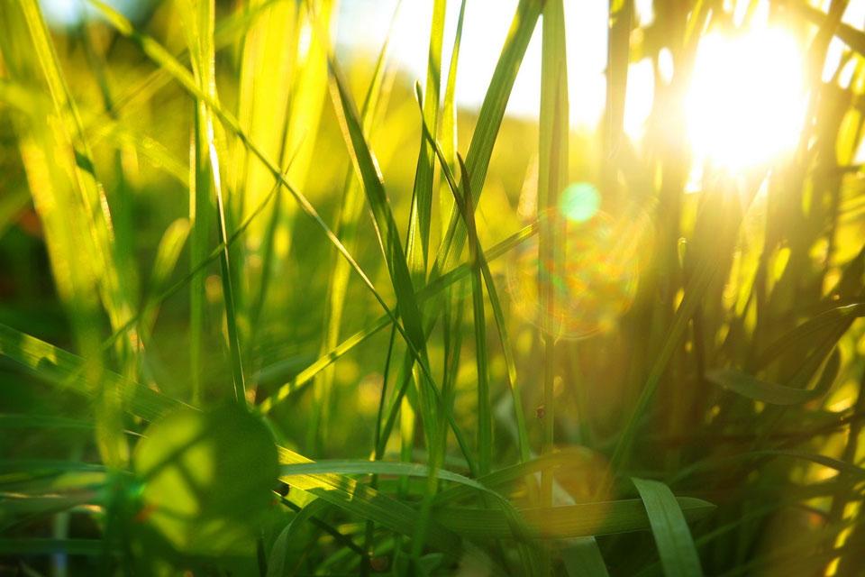 Интересные-картинки-лета,-вся-красота-природы-13