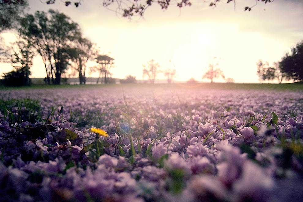 Интересные-картинки-лета,-вся-красота-природы-5