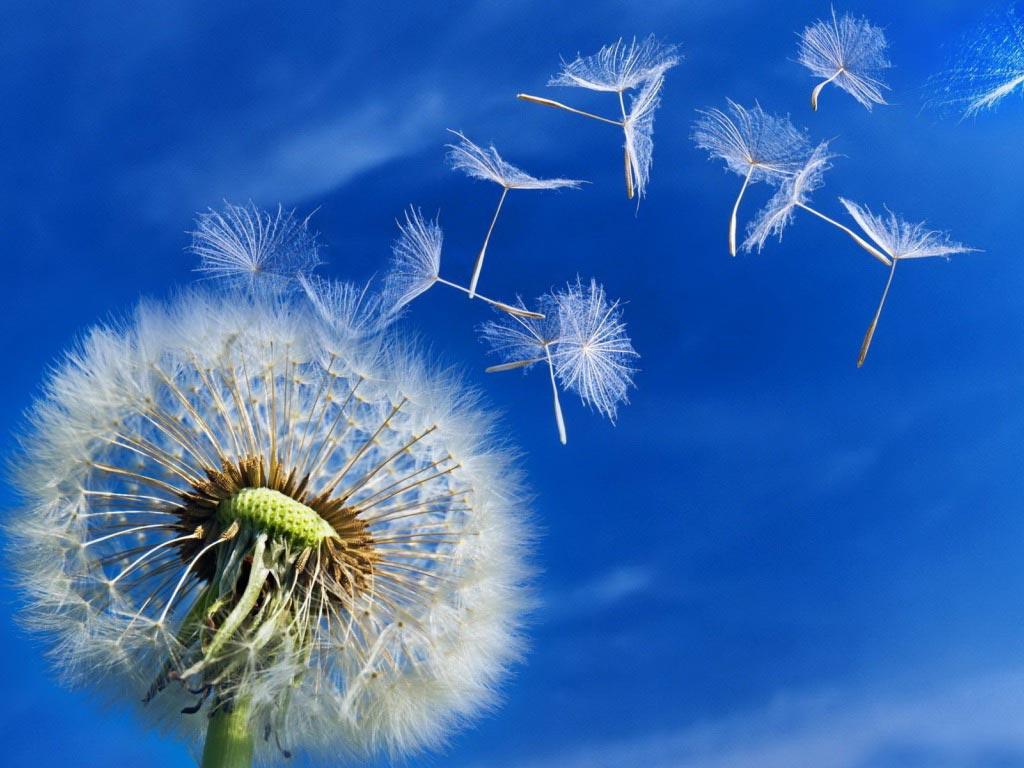 Интересные-картинки-лета,-вся-красота-природы-7