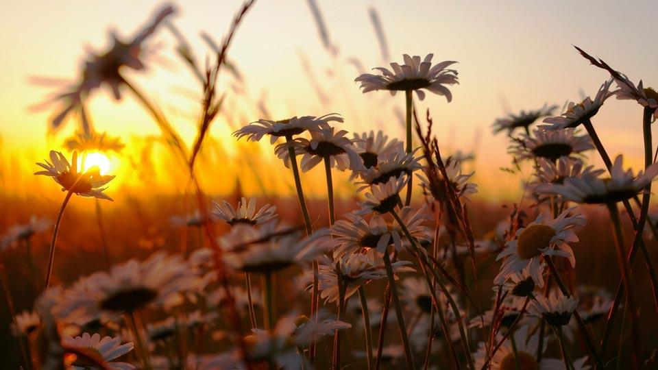Интересные-картинки-лета,-вся-красота-природы-8