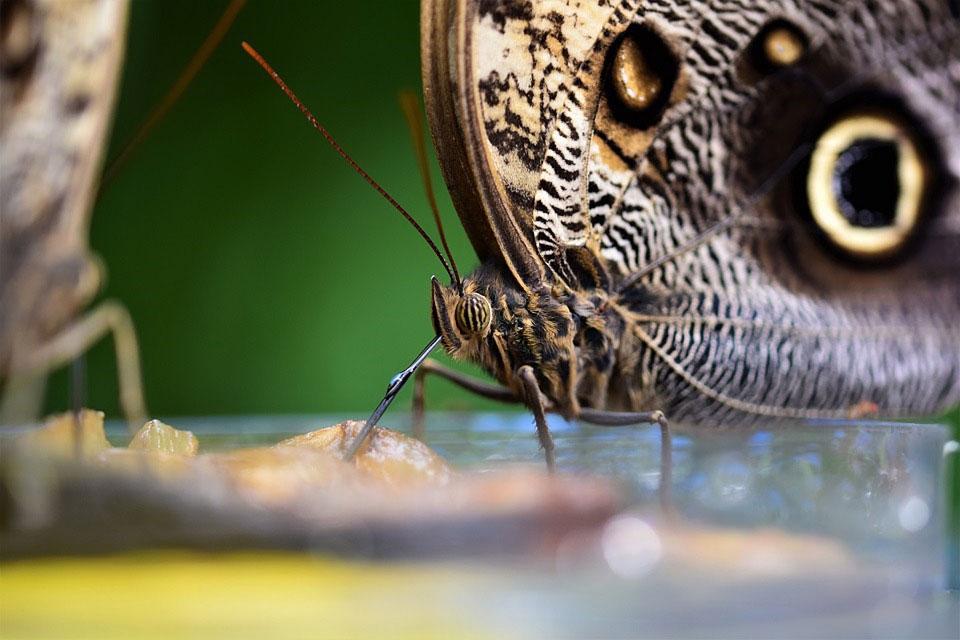 Красивые-и-интересные-картинки-бабочек---чудные-и-удивительные-1
