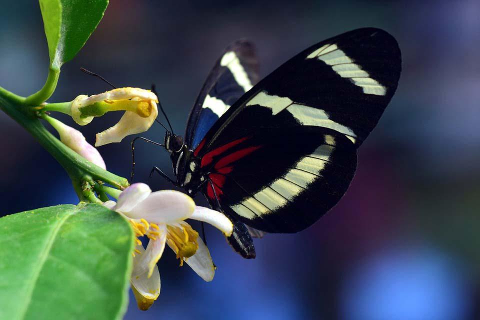 Красивые-и-интересные-картинки-бабочек---чудные-и-удивительные-10