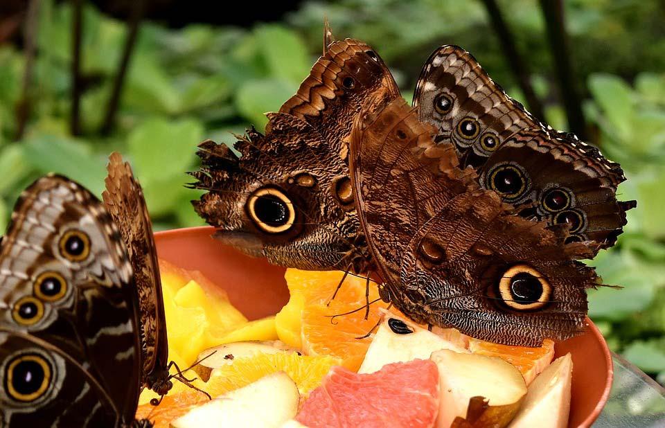 Красивые-и-интересные-картинки-бабочек---чудные-и-удивительные-12