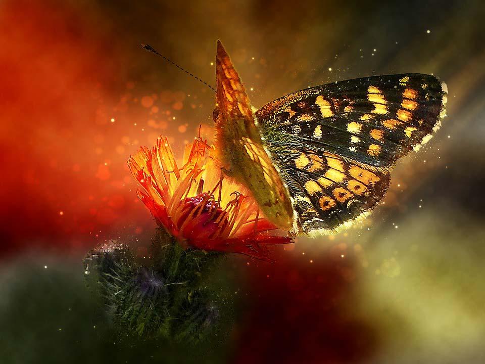 Красивые-и-интересные-картинки-бабочек---чудные-и-удивительные-13