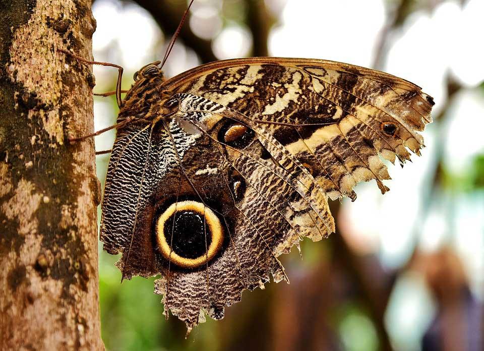 Красивые-и-интересные-картинки-бабочек---чудные-и-удивительные-14