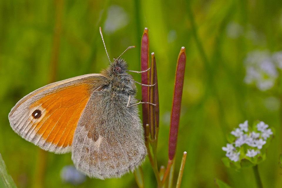 Красивые-и-интересные-картинки-бабочек---чудные-и-удивительные-15