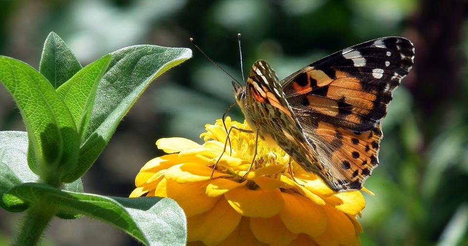 Красивые-и-интересные-картинки-бабочек---чудные-и-удивительные-2