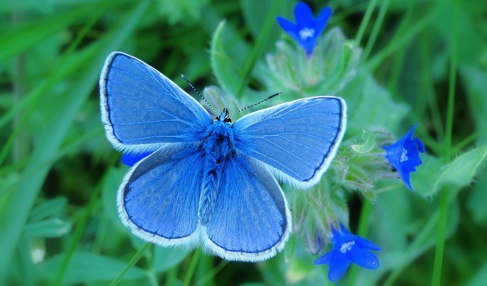 Красивые-и-интересные-картинки-бабочек---чудные-и-удивительные-3
