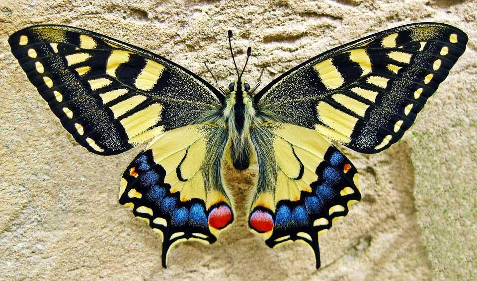 Красивые-и-интересные-картинки-бабочек---чудные-и-удивительные-4