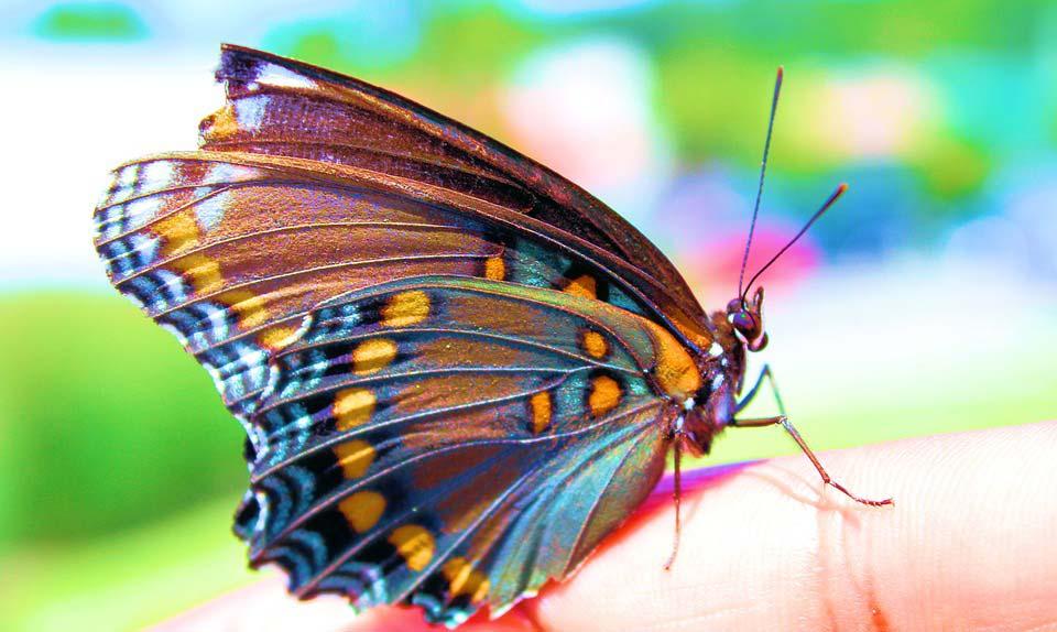 Красивые-и-интересные-картинки-бабочек---чудные-и-удивительные-5