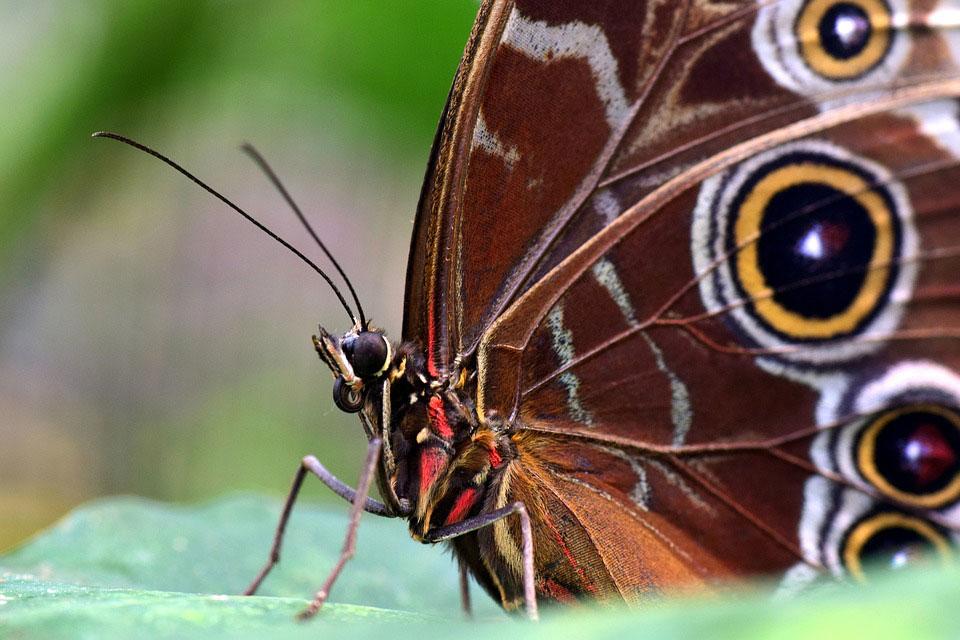 Красивые-и-интересные-картинки-бабочек---чудные-и-удивительные-6