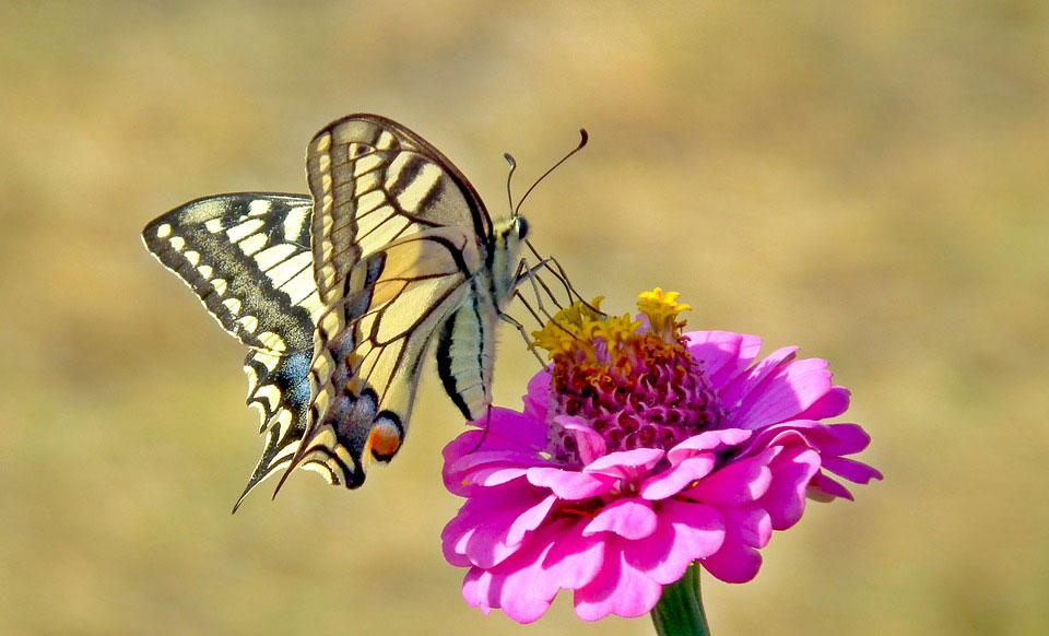 Красивые-и-интересные-картинки-бабочек---чудные-и-удивительные-7