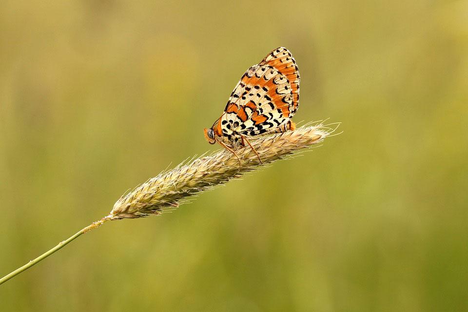 Красивые-и-интересные-картинки-бабочек---чудные-и-удивительные-8