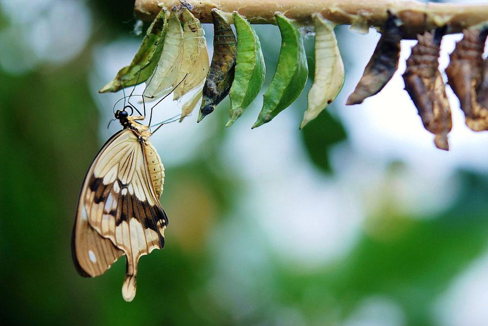 Красивые-и-интересные-картинки-бабочек---чудные-и-удивительные-9
