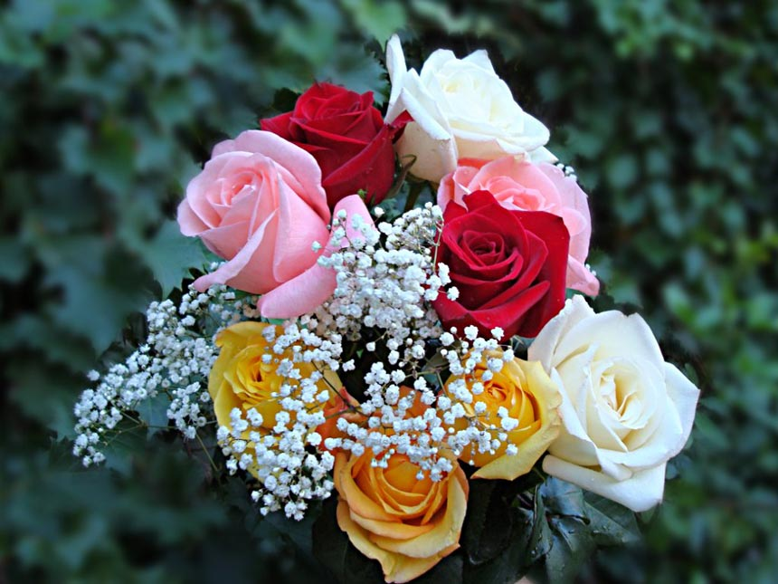 Красивые-картинки-розы-и-букеты-роз---самые-удивительные-1