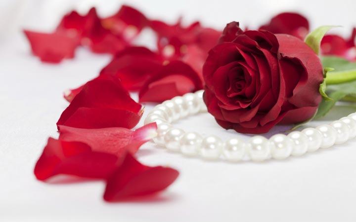 Красивые-картинки-розы-и-букеты-роз---самые-удивительные-11