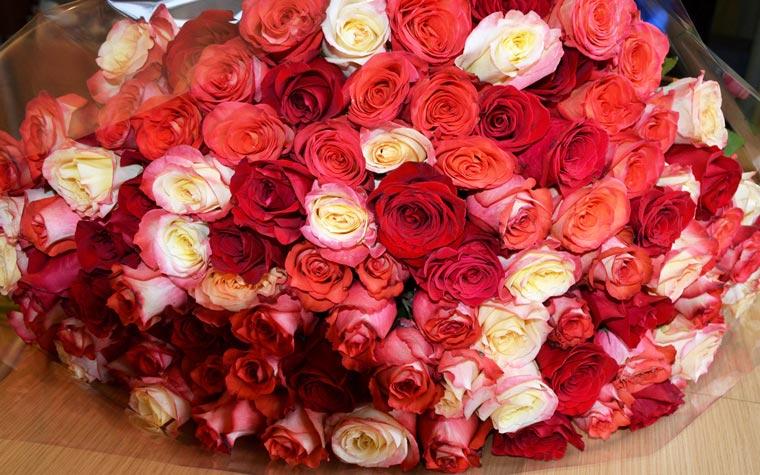 Красивые-картинки-розы-и-букеты-роз---самые-удивительные-3