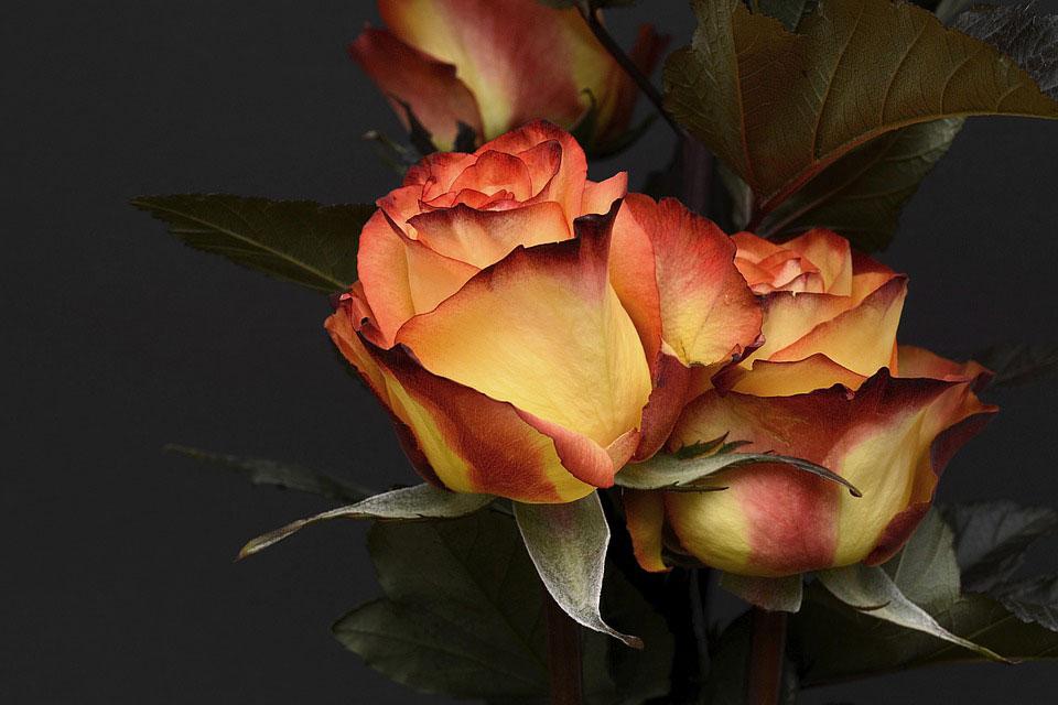 Красивые-картинки-цветов-и-букетов---удивительная-подборка-2