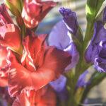 Красивые-картинки-цветов-и-букетов---удивительная-подборка-4