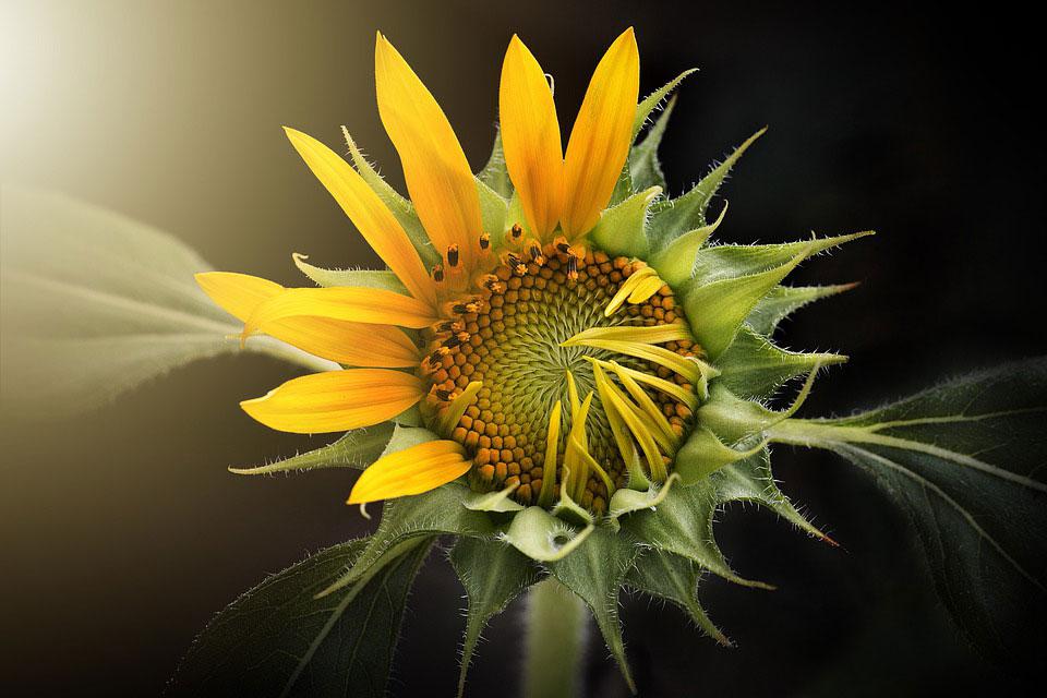 Красивые-картинки-цветов-и-букетов---удивительная-подборка-5