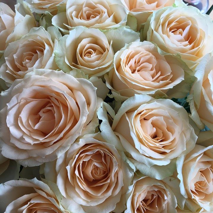 Красивые-картинки-цветов-и-букетов---удивительная-подборка-6'