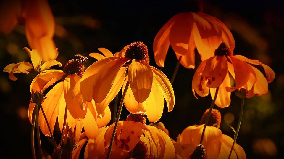 Красивые-картинки-цветов-и-букетов---удивительная-подборка-7