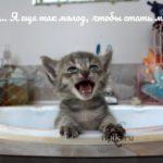 Прикольные-и-забавные-картинки-котиков-с-надписями---сборка-2018-11
