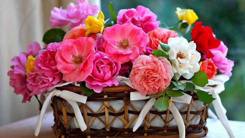 Скачать-фото-цветов-бесплатно---очень-красивые-и-прекрасные-9