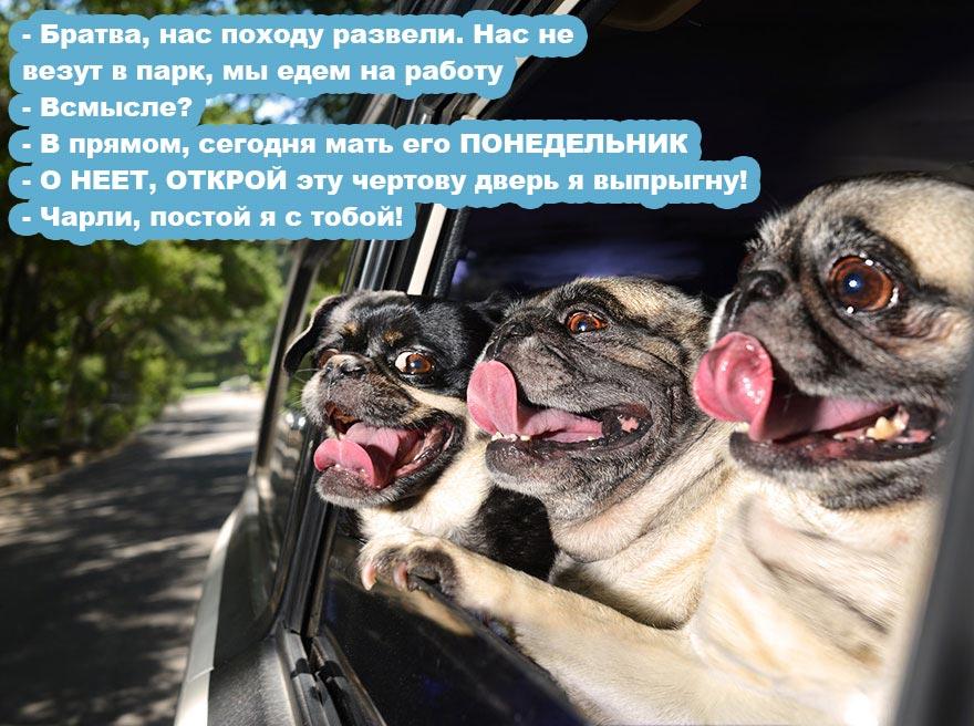 Смешные-кСмешные-картинки-завтра-на-работу---самые-веселые-и-прикольные-10артинки-завтра-на-работу---самые-веселые-и-прикольные-10