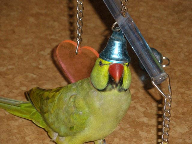 Смешные-картинки-про-попугаев---очень-ржачные-и-прикольные-11