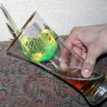 Смешные-картинки-про-попугаев---очень-ржачные-и-прикольные-2