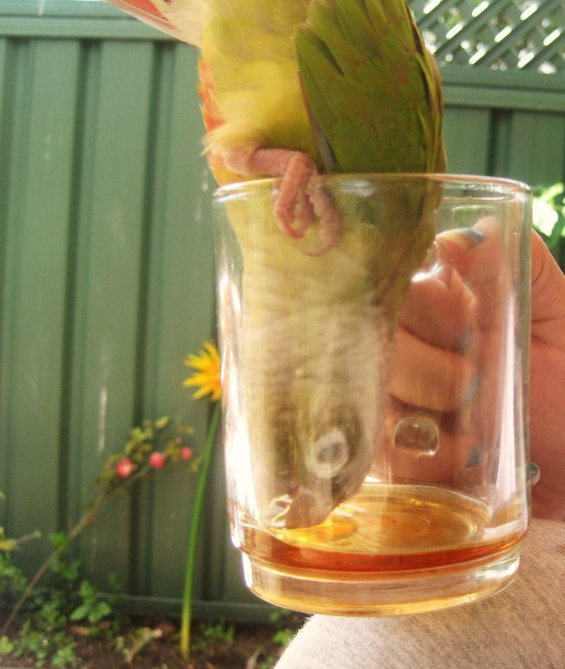 Смешные-картинки-про-попугаев---очень-ржачные-и-прикольные-3