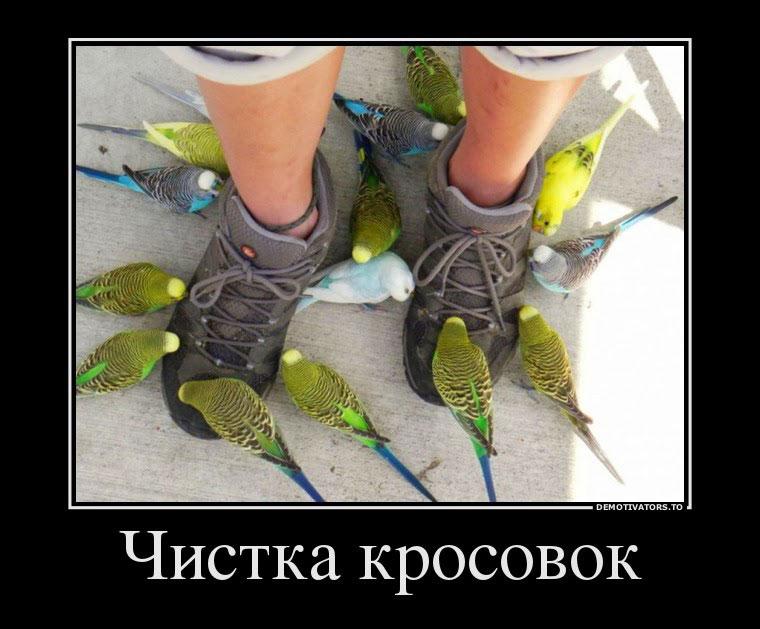 Смешные-картинки-про-попугаев---очень-ржачные-и-прикольные-4