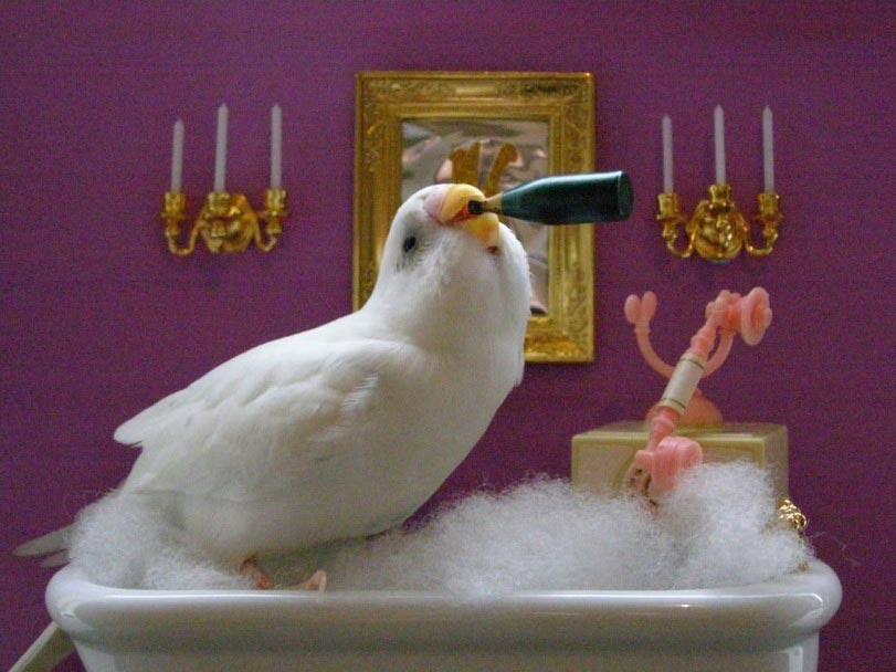 Смешные-картинки-про-попугаев---очень-ржачные-и-прикольные-5