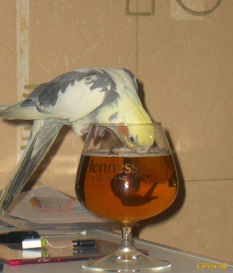 Смешные-картинки-про-попугаев---очень-ржачные-и-прикольные-6