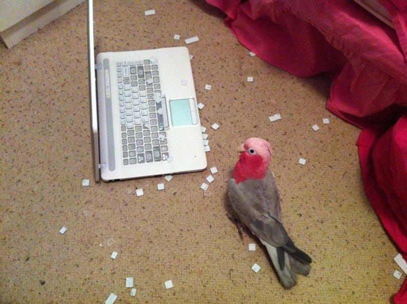 Смешные-картинки-про-попугаев---очень-ржачные-и-прикольные-7