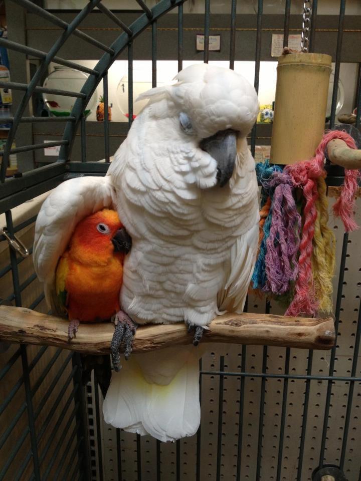 Смешные-картинки-про-попугаев---очень-ржачные-и-прикольные-8