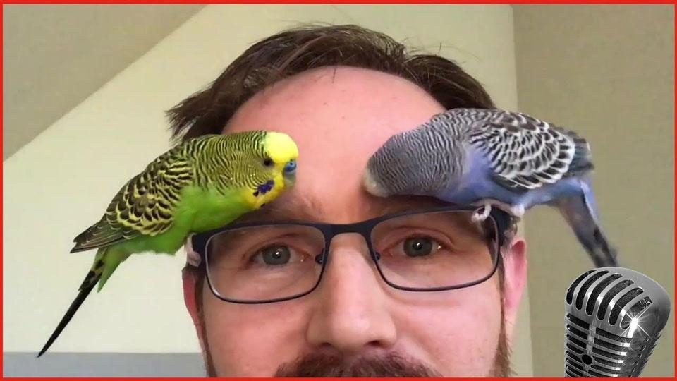 Смешные-картинки-про-попугаев---очень-ржачные-и-прикольные-9