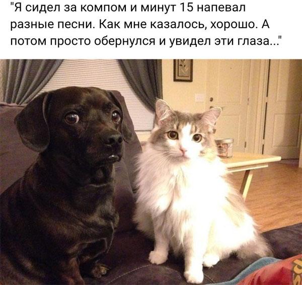 Смешные картинки про собак с надписями 1