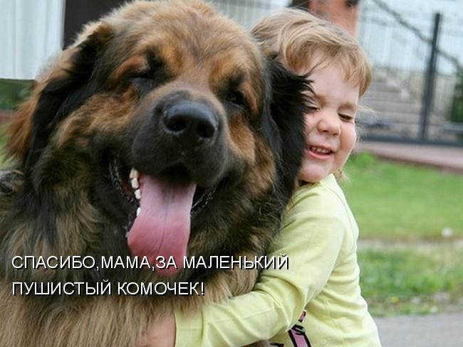 Смешные картинки про собак с надписями 11