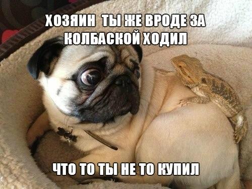 Смешные картинки про собак с надписями 12