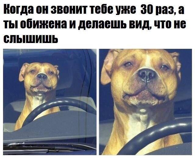 Смешные картинки про собак с надписями 2