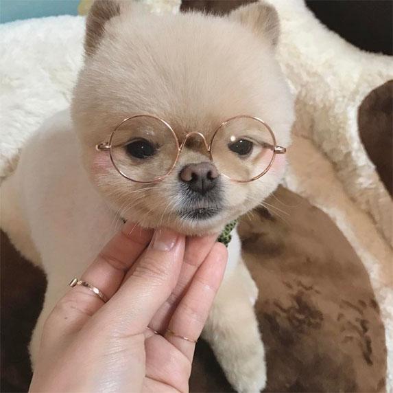 Смешные картинки про собак с надписями 4