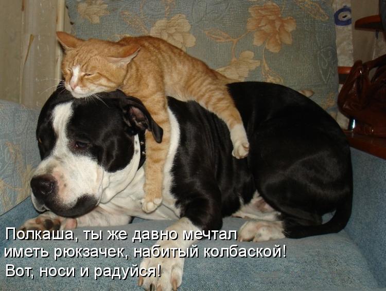 Смешные картинки про собак с надписями 6