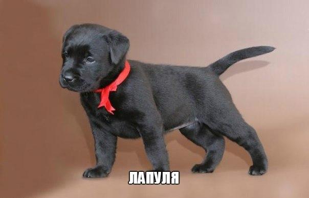 Смешные картинки про собак с надписями 8