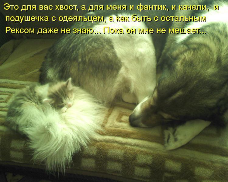 Смешные картинки про собак с надписями 9