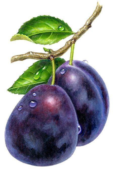 Цветные овощи и фрукты картинки для детей - красивые и прикольные 17